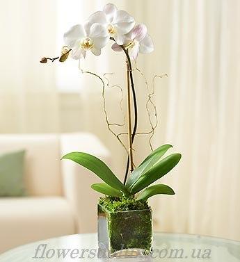 Орхидея №4