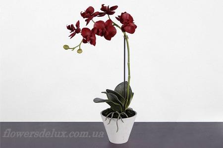 Орхидея №5