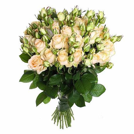 101 кремовая роза спрей