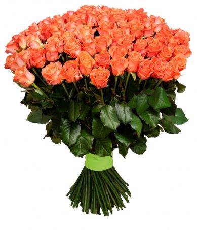 Роза Вау 50 см
