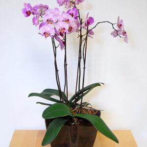 Орхидея №7