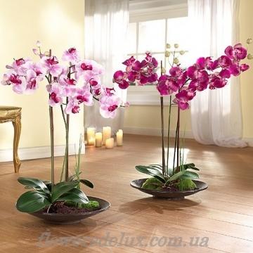 Орхидея №2